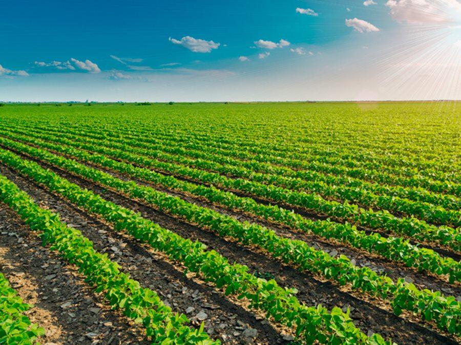 1 106 Produtores em regime de economia solidária terão prioridade na venda para alimentação escolar