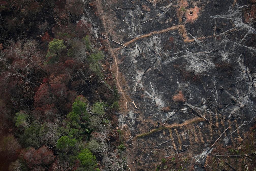 """""""O Brasil vem passando por um processo de aumento acentuado do desmatamento da Amazônia"""", afirma docente da UniFG"""