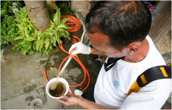 Nordeste é a região do Brasil que apresenta maior incidência de zika